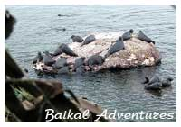 Baikal reserved places